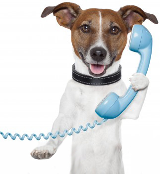 dog holding a telephone