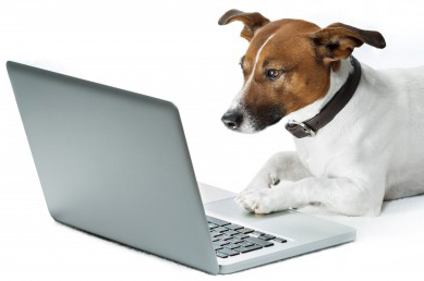 dog using a laptop computer