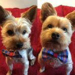 Small Dog Grooming at Fancy Feet Grooming