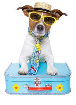 dog with a hat and tie and sunglasses leaning on a suitcase