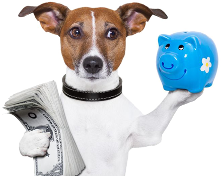 dog holding cash and a piggy bank