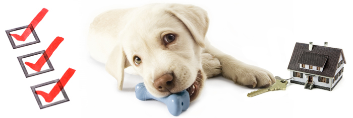 checklist, puppy chewing on a rubber bone with paw on key and a small house