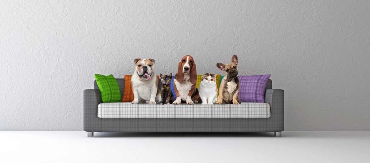 slider-bg-couch